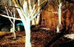 Побелка деревьев весной: особенности процедуры, правила проведения