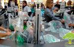 Чем вредна пластиковая посуда и как обойтись без неё на пикнике