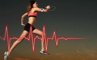 Пульсовые зоны для похудения не работают, и вот почему