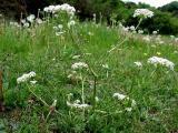 Съедобные травы и рецепты полезных блюд на их основе